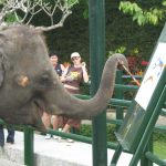 Elefante dibujando. ©BBC