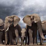 Animales extraordinarios del Amazonas. ©BBC
