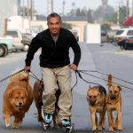Cesar paseando perros. ©cesarsway