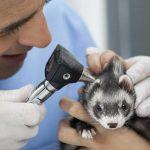 Veterinario revisando a su pequeño paciente. ©Shutterstock