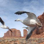 Descubre el desierto desde el punto de vista de las aves. ©BBC