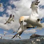 Volando a través del océano. ©BBC