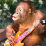 Orangután musical. ©Shutterstock