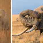 Elefantes africanos 9 10 Tom Stahl