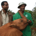 Rageh Omaar and Keeper at the David Sheldrick Wildlife Trust, Nairobi. ©BBC
