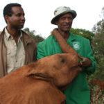 Rageh Omaar and Keeper at the David Sheldrick Wildlife Trust, Nairobi. ©BBC