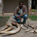 Reporter Rageh Omaar, with illegal ivory seized by the Kenyan Wildlife Service. ©BBC
