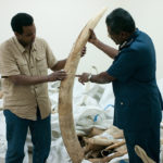 Reporter Rageh Omaar, with a fraction of the four tonnes of ivory. ©BBC