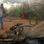 Reporter Rageh Omaar, with the remains of a poached elephant. ©BBC