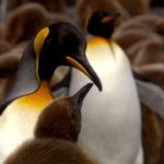 Familia de pingüinos ©BBC