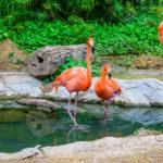 Flamingos ©Shutterstock