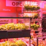 Huertas orgánicas 1