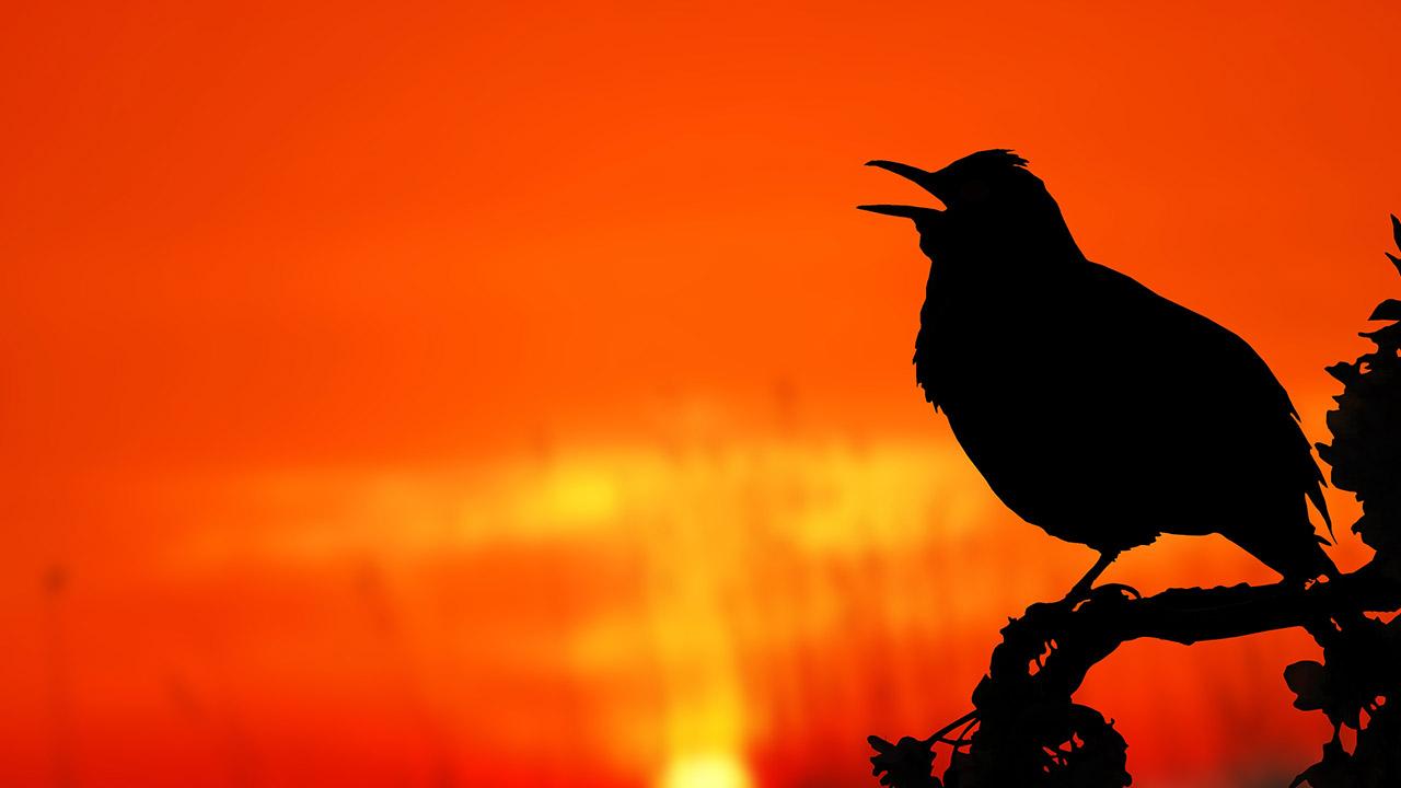 Levantarte más temprano puede cambiar tu vida