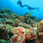 Arrecife de coral, Mar Rojo