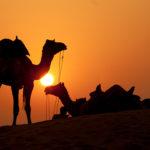 Camellos en el desierto. ©Shutterstock