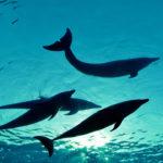 Delfines nadando ©Shutterstock