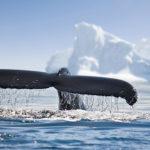 Hermosa-vista-de-icebergs-y-ballenas-en-la-Antártida
