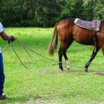 Domando a caballo. ©Pixabay