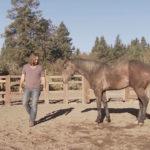 El-domador-de-caballos