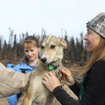 El equipo discute la condición de un perro de trineo. ©National Geographic Channels:Ross Radcliffe
