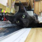 Gato descansando en la oficina. ©National Geographic:Michael Stankevich
