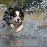 Jugando en el agua. ©Pexels
