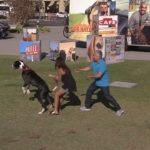Cesar instruye a mujer con un enorme perro agresivo. ©Leepson Bounds