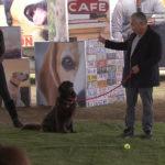 Cesar trabaja con un perro y una pelota. ©Leepson Bounds