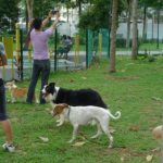 Parque de perros en Singapore. ©National Geographic Channels/Nick Oh