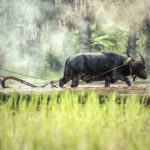 Agricultura, Tailandia. ©Pixabay