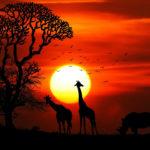 Atardecer en África. ©Pixabay