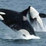 Ballenas en el mar. ©Pixabay