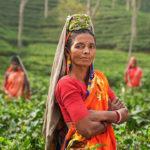 Campos en India. ©Pixabay