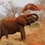Elefante africano. ©Pixabay