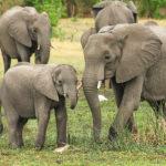 Familia de elefantes. ©Pixabay