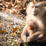 Familia-de-monos-ladrones.-©Pixabay