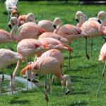 Flamingos. ©Pixabay