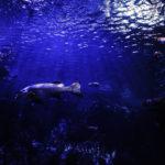 Fondo del mar. ©Pixabay