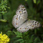 Mariposa, Tailandia. ©Pixabay