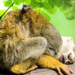 Mono del Amazonas. ©Pixabay