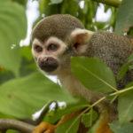 Mono en las ramas. ©Pixabay