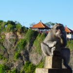 Mono ladrón con los lentes que robó. ©Shutterstock