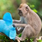 Mono ladrón. ©Shutterstock