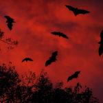 Murciélagos. ©Shutterstock