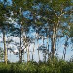 Selva Amazónica. ©Pixabay