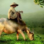 Vaca, Vietnam. ©Pixabay