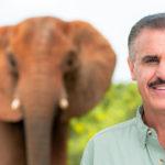 Elefante y Ron Magill