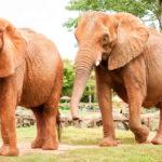 Elefantes, Mundo Salvaje