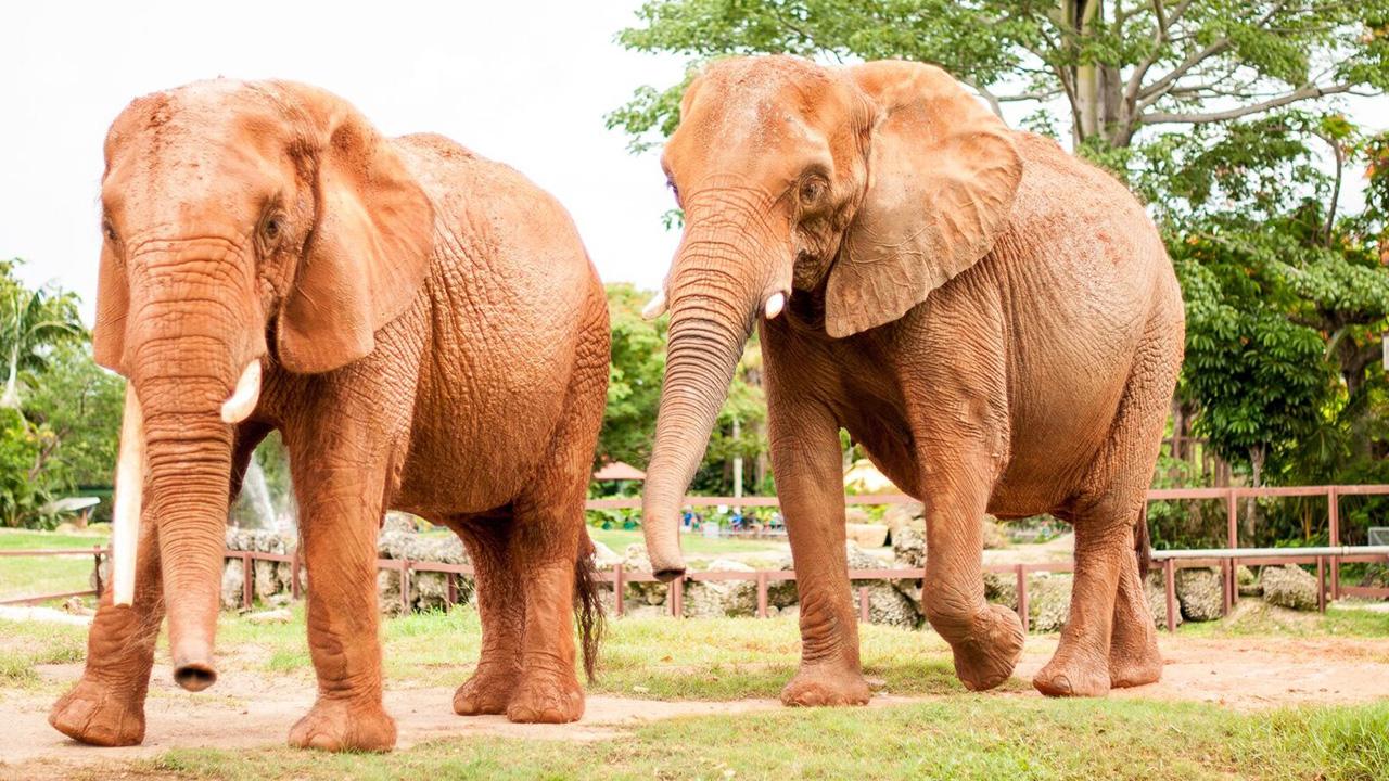 10 Datos curiosos sobre elefantes