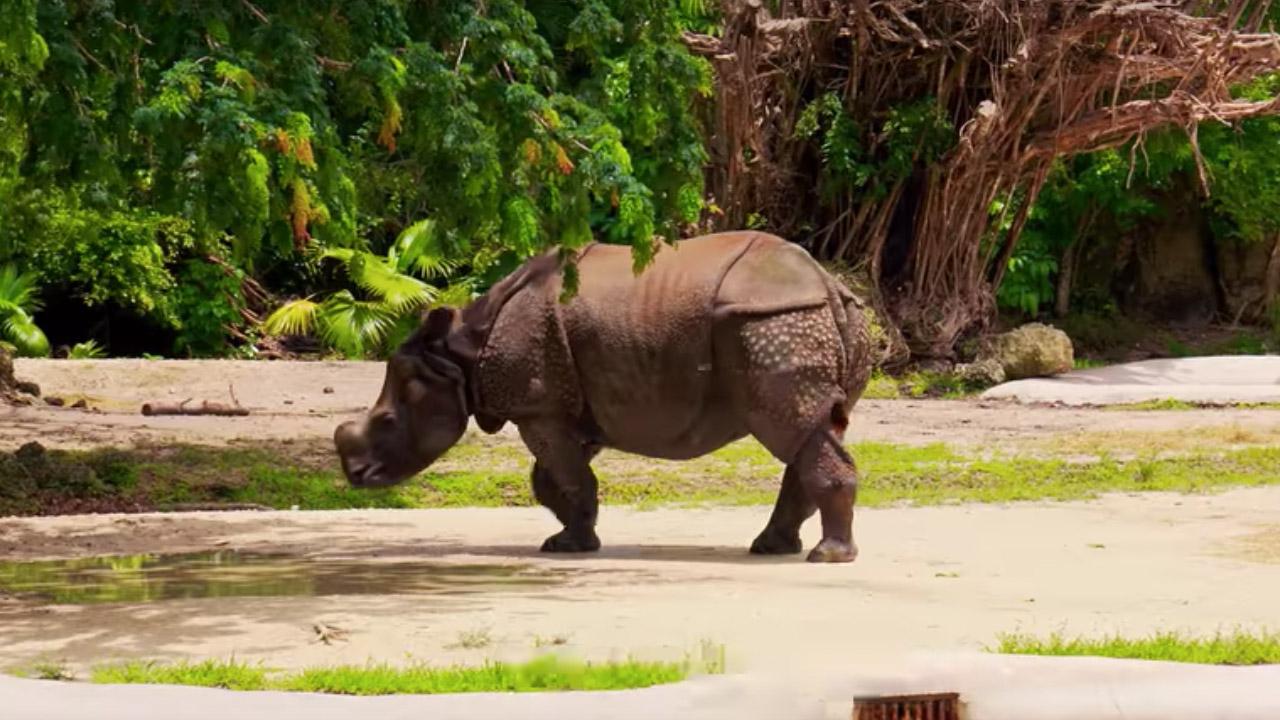 10 datos curiosos sobre rinocerontes